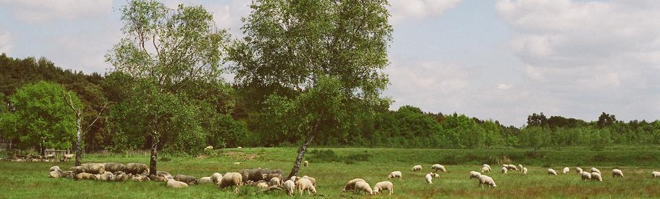 Groote Heide - Wandelcoaching